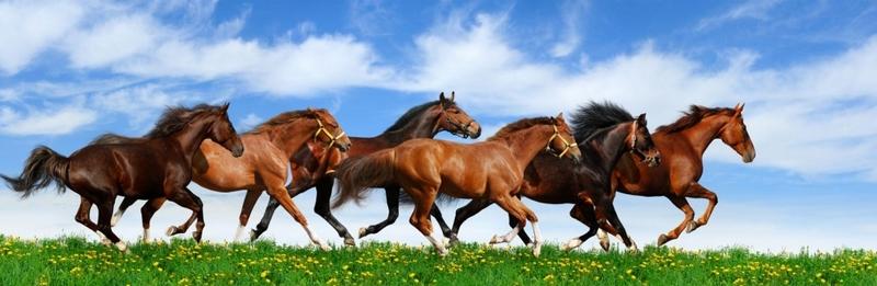 Energizing horses