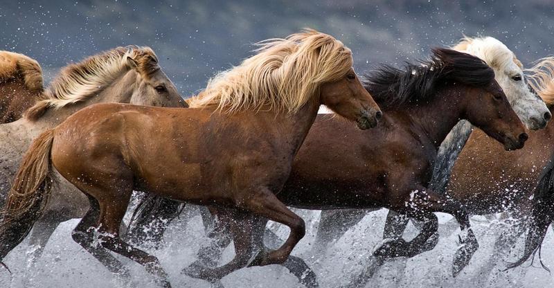 HP horses diet