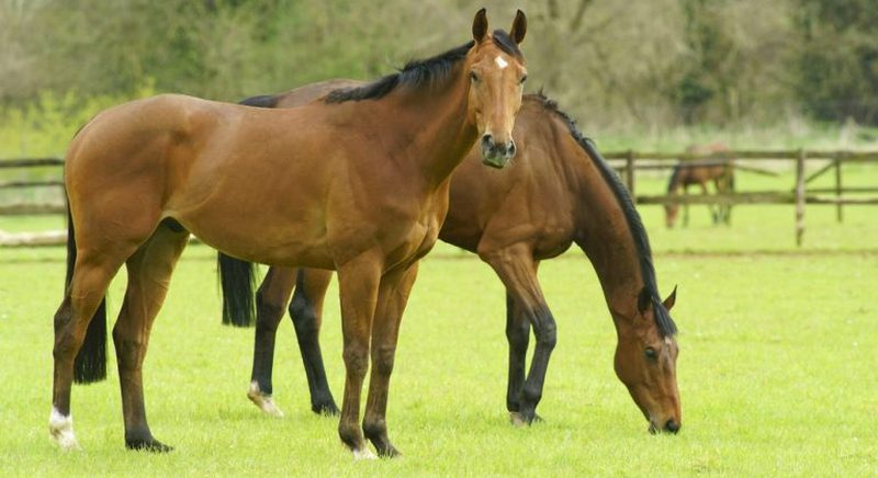 Protein for horses