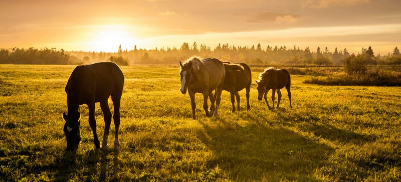 Horse Nutrition Experts