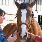 Portable Technology Benefits Equine Reproduction