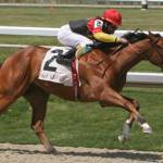 Role of Coenzyme Q10 in Horse Nutrition