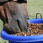 Stress Behavior, Diet, and Equine Hindgut Health