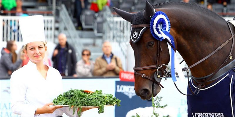 Sport horse nutrition